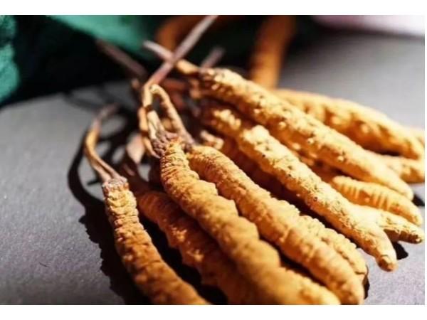 吃冬虫夏草保护肝脏、抗疲劳,提高免疫力!